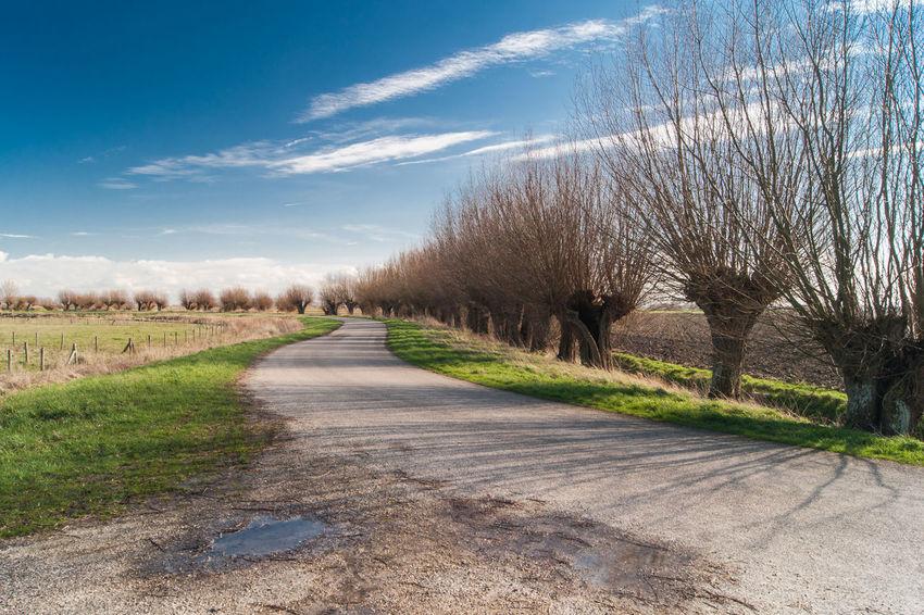 Landscape Sony A700 Willow Tree Dikeroad Dike The Netherlands Zeeland  Zeeuws Vlaanderen EyeEm Market ©