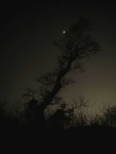 Trees And Sky Black & White Tree Jungle Trail Astronomy Rural Scene Silhouette Moonlight Spooky Solar Eclipse