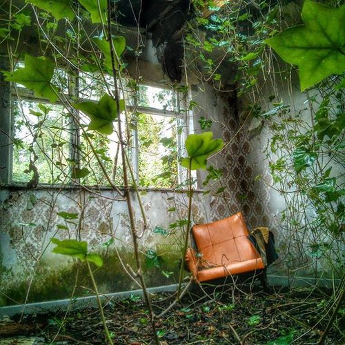 Derelict Cottage Abandoned Abandoned House Vines Ivy Chair Chairswithstories Pattern Pieces Overgrown Orange Chair Derelict Pastel Power Here Belongs To Me Up Close Street Photography Showing Imperfection Telling Stories Differently My Favorite Photo The Photojournalist - 2016 EyeEm Awards Home Is Where The Art Is End Plastic Pollution