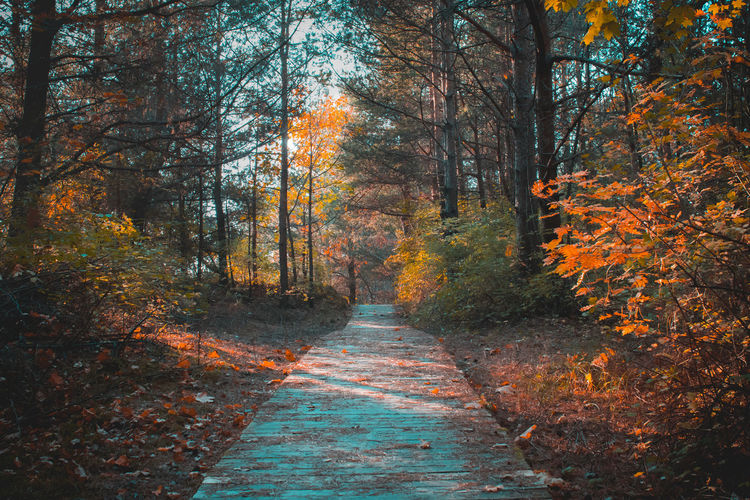Footpath Amidst Trees In Forest During Autumn