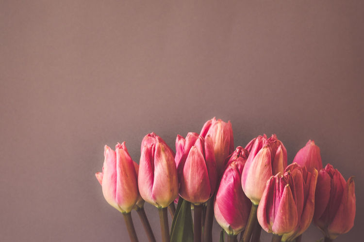 Tulips Flower Pink Color Flowering Plant Beauty In Nature Freshness Vulnerability  Plant Fragility Studio Shot Petal Close-up Tulip Indoors  Colored Background Inflorescence Flower Head Nature No People Copy Space Gray Background Flower Arrangement Bouquet Purple Springtime