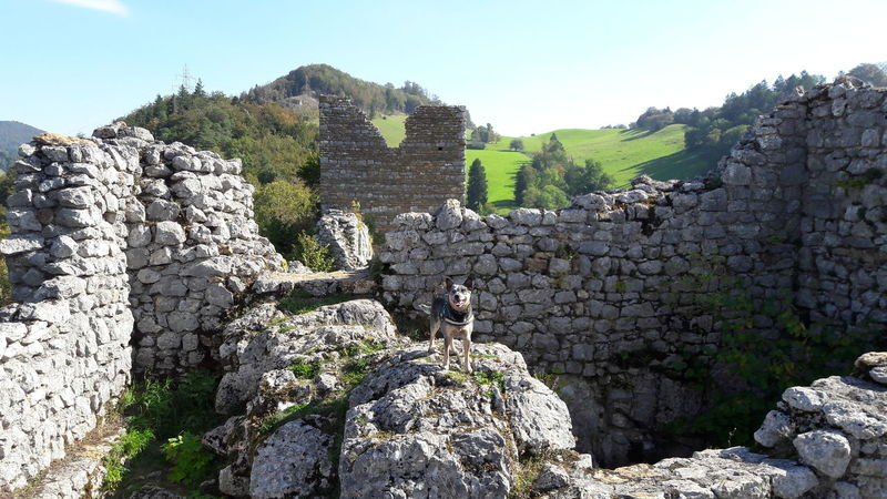 Fotobomb 😂😁 Old Ruin Sky Mountain Archaeology Beauty In Nature Nature Rock Formation Power In Nature Switzerland Beauty In Nature Nature Cattledog Blueheeler Photobomb
