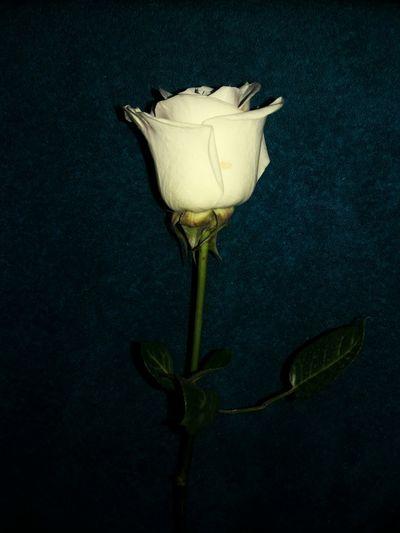 EyeEm Selects Flower, White, Nature,