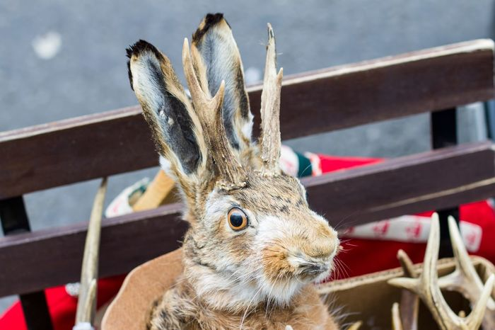 Rabbit London Check This Out Taking Photos Taxidermy Art Taking Photo Taking Pictures Bunny