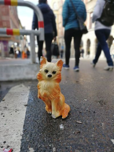 Chiwawa Broken Lonely Södermalm Left Left Behind Unloved Porcelain  Dog Porcelain Dog City Toy Low Section Close-up Toy Animal Animal Representation
