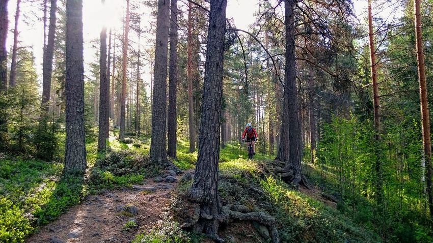 Forest Outdoors Tranquility Beauty In Nature Nature Naturelovers Summer Vibes Arctic Light Tranquility Ilovenature Naturephotography Rovaniemi, Finland Lapland, Finland Tree Nature Iloveolddoors 💜life Is Good 💙 Amazing Day Travel Destinations Beauty In Nature Arctic Summer Cyclist Cyclingphoto