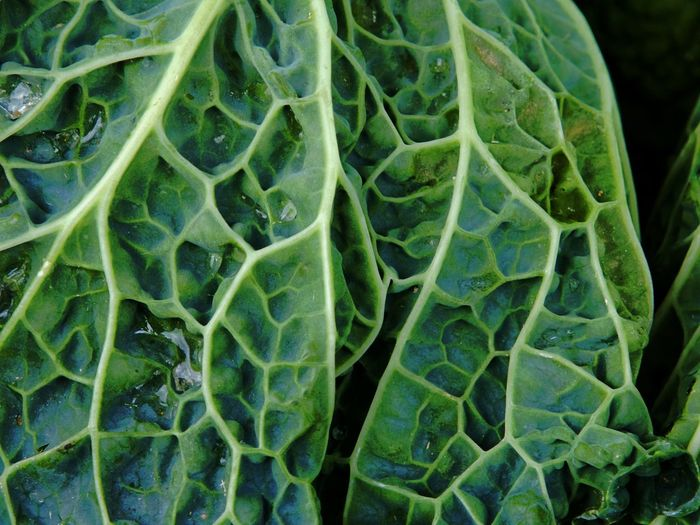 Backgrounds Close-up Day Food Food And Drink Freshness Full Frame Green Color Healthy Eating Leaf Nature No People Outdoors Savoy Cabbage Vegetable