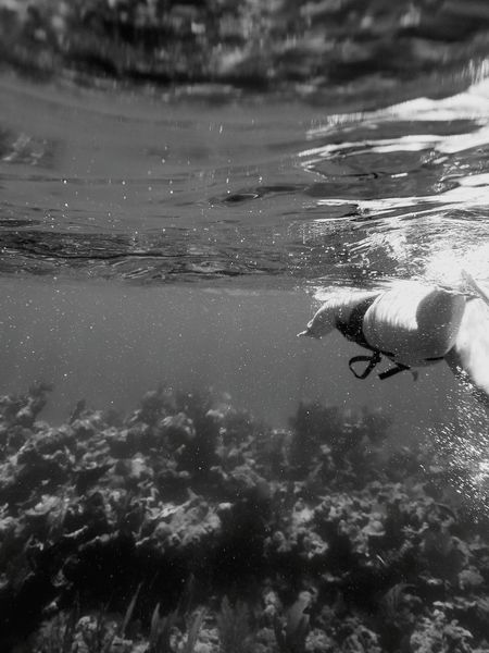 Masstrom Photography Join Me Ocean View Underwater Black And White Underwater Daily Life Be Yourself Simplicity Solitude Silence Love Black And White Photography Blackandwhite Photography Key Largo Salt Life Darker Days Waves Are Pumping Adventure Club
