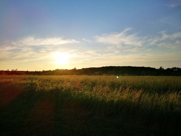 Like Anne, looking forward to tomorrow Sunset_collection Anne Of Green Gables Sunset Crop  Cavendish Prince Edward Island Canada Happiness Warmth Open Field Golden Hour Golden Sunset Sky Skyline Field Summer Beauty In Nature Leicagraphy Leicaexplorer HuaweiP9 Travel Travel Destinations Agriculture Field Nature Plant Farm