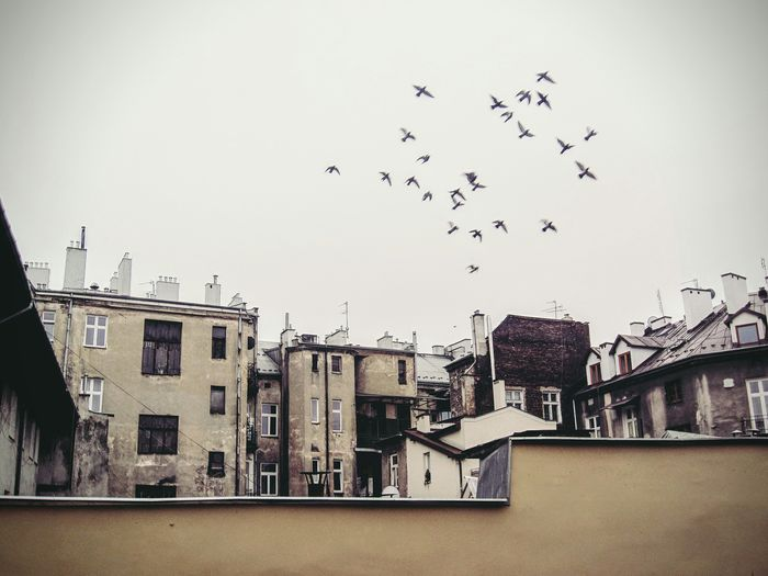 Low Angle View Of Buildings Against Flying Birds