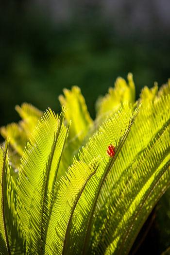 Red leaf on a