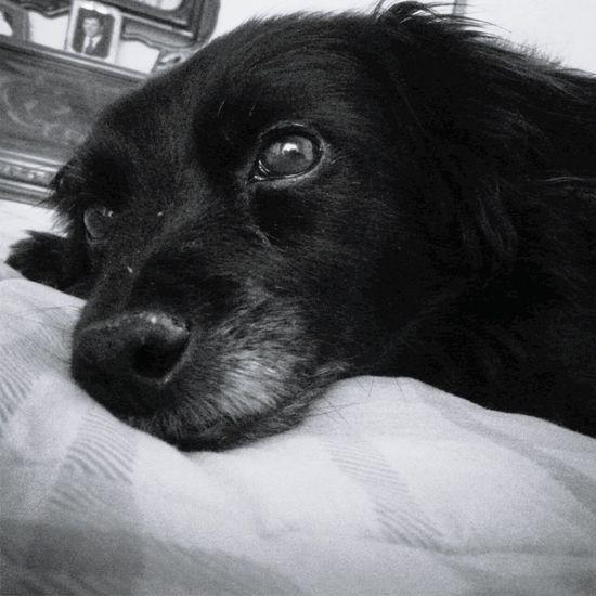 Love ♥ Pets Angel Domestic Animals Home