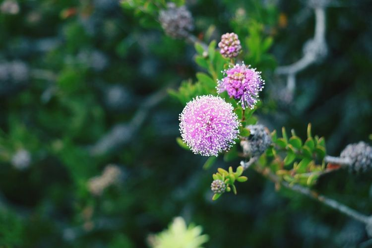 🌱 Outdoors Green Background Flower Head Beauty In Nature EyeEm Selects