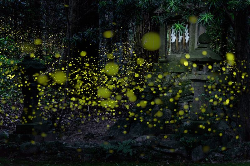Night Tree Outdoors Nature No People Beauty In Nature Eye Em Nature Lover Japan Firefly Yellow Long Exposure
