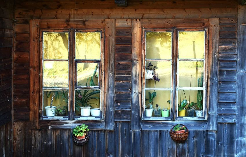 Plants Potted Plant Potted Plants Flowerpot Highlanders Zakopane Zakopane, Poland Poland Basket Rustic Style Mirror Reflection Boards Wooden Cottage Old House Flower Orchid Polishphotographer Nikon Nikonphotography Nikond3300 Photographer Photography Windows Window Day Wood - Material Rusty Indoors  Architecture No People Weathered Close-up Built Structure Abandoned