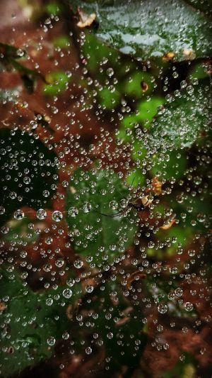 Ze601kl Zenfone2laser Afterrain Raindrops Spiderweb паутина Mobilephotography мобильная фотография после дождя  капли дождя