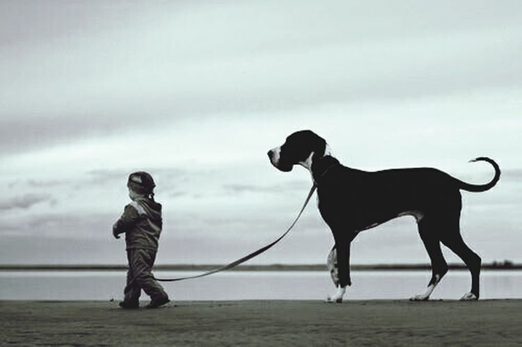 What Makes You Strong? Beautiful Day Boy And Dog 4ever