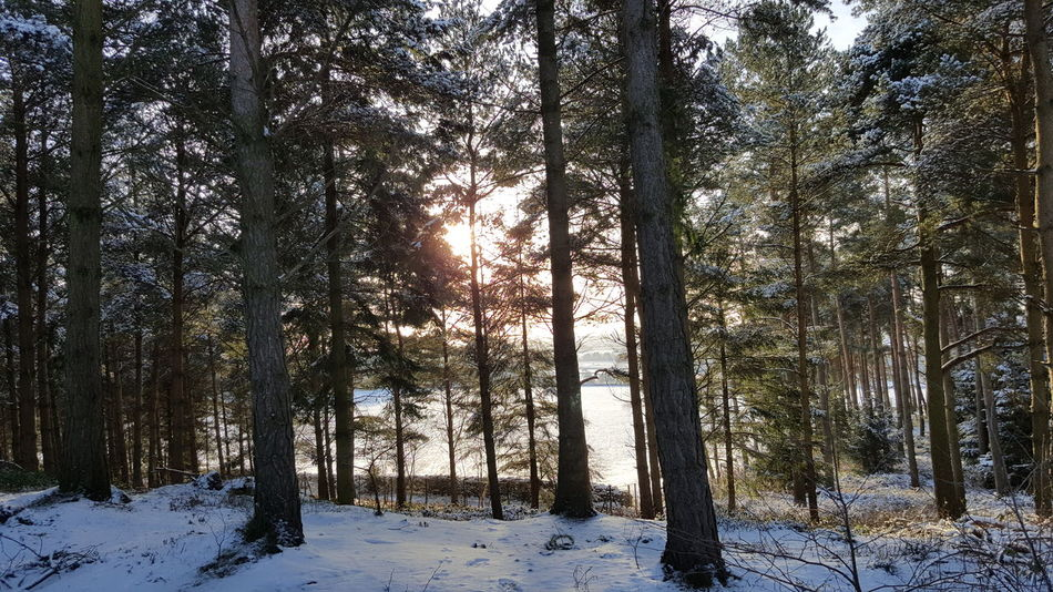 Nofilter Unfiltered WoodLand Center Parcs Penrith Forest Winter England Uk Landscape North Whinefell Scenery Scenery Shots