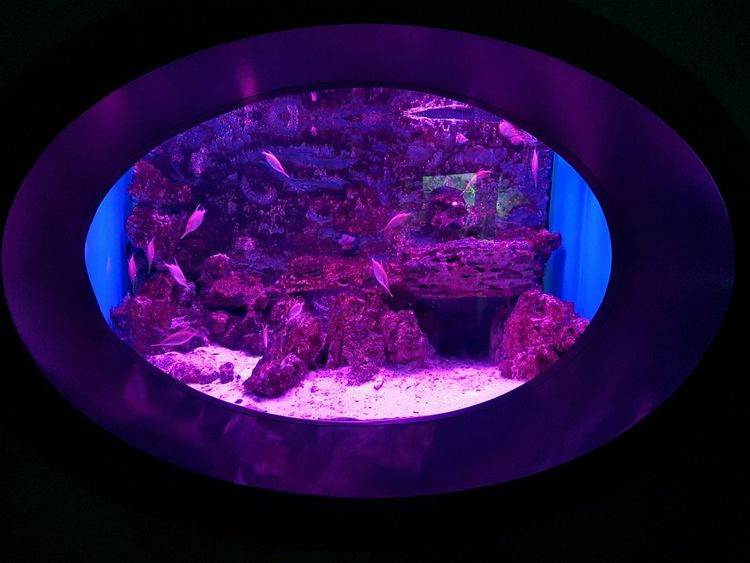 Purple Night Sea Life Aquarium UnderSea Aquarium Life Water Underwater Fishes River World Sea Fish Mosqarium ELLIPSE Elliptical эллипс Water Eliminator Violet аквариум москвариум