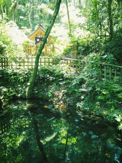 Short Trip Temple この池に紙を浮かべて吉凶を占うそうです