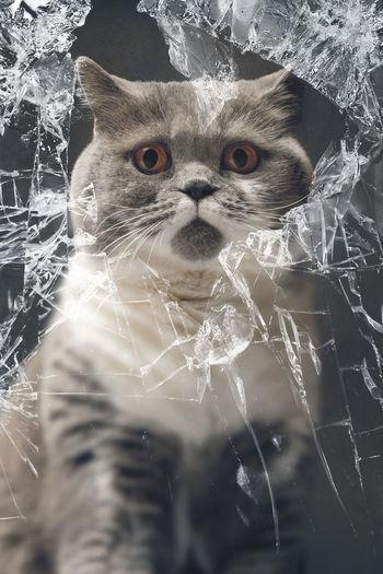 Portrait of cat by broken glass