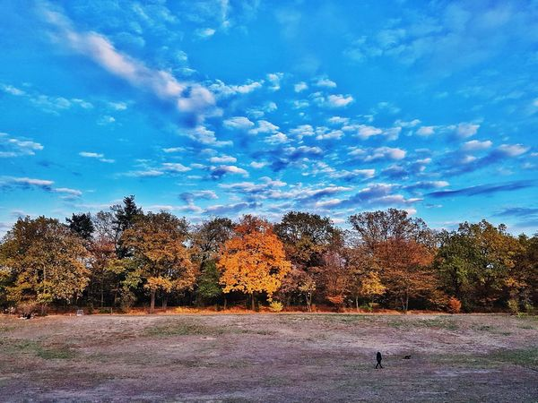 Colours of autumn Autumn Mood Melancholic Landscapes Beauty In Nature Beautiful Day Fall Fall Colors Fall Beauty Autumn Beauty Urban Nature Orange Color Autumn Autumn colors Tree Sky Tranquil Scene Calm Idyllic Tranquility Scenics