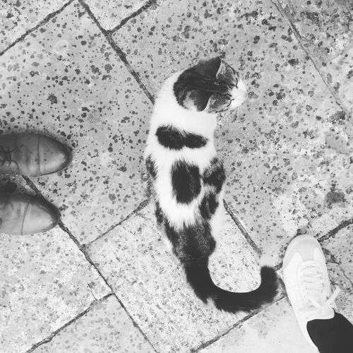 High angle view of cat standing on tiled floor