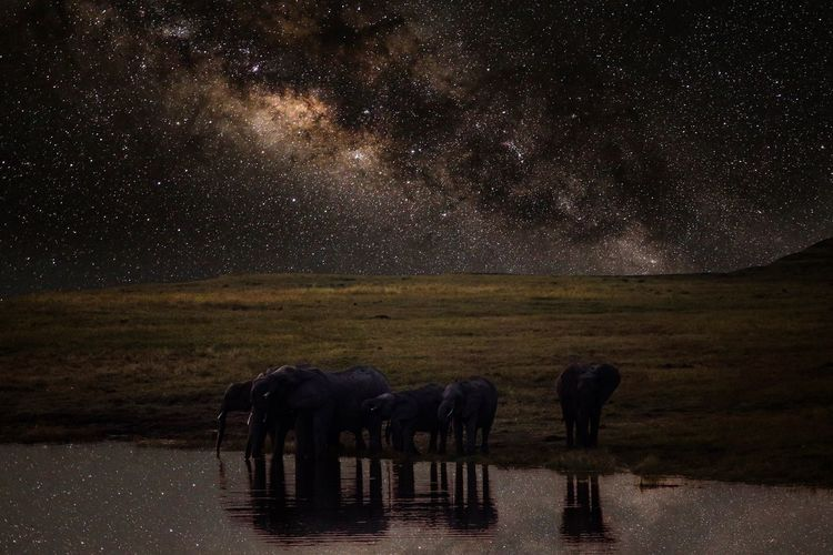 Elephants by lake at night