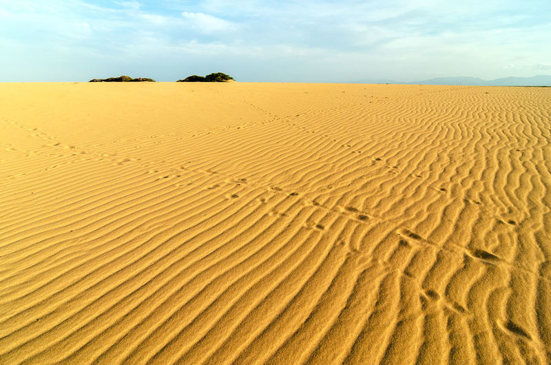 Patterns on a sand dune in La Guajira, Colombia Adventure Background Barren Colombia Desert Desolate Drought Dry Dune Dunes Heat Hill Hot Laguajira Landscape Nature Outdoors Sand Scenic Sulight Summer Tourism Travel Wave Wilderness