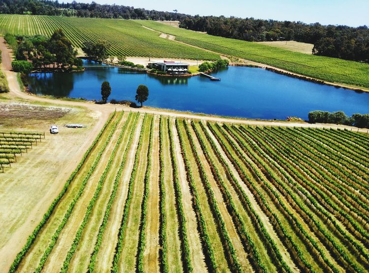 Agriculture Rural Scene Farm Aerial View Nature No People Landscape Outdoors Beauty In Nature Day Vineyard Winery High Angle View Pond Building Car WA Water Plant Reflection Grape Tree Magnificent Amazing Pier Lake Finding New Frontiers