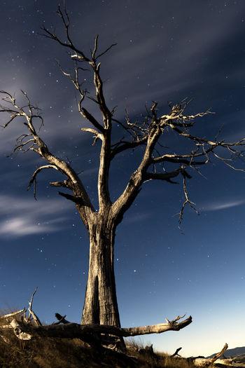 Supermoon Tree