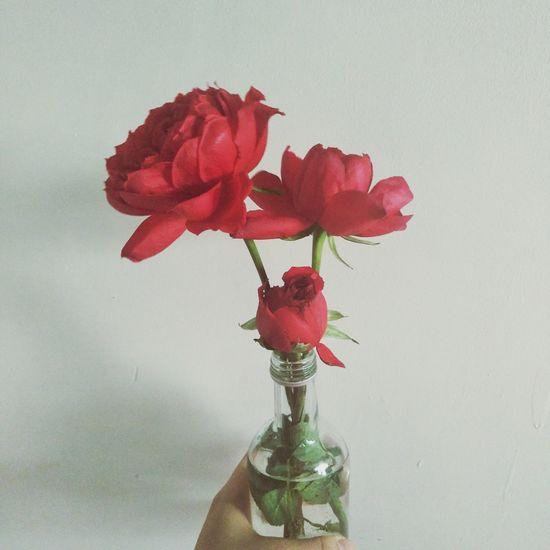Flower Petal Red Rose - Flower Fragility Vase Flower Head