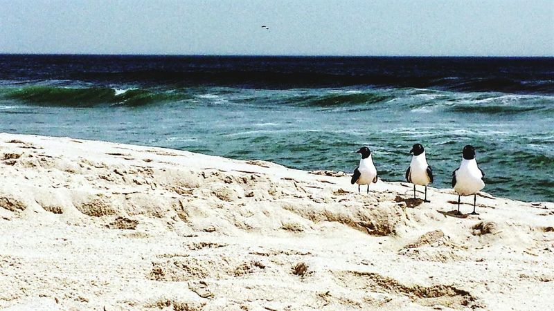 Hanging Out Taking Photos Cheese! Relaxing Hello World Beautiful On The Beach Relaxing ♥ Jerseyshore Relaxing