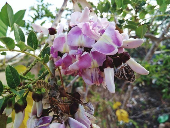 Borboletas No People Growth Focus On Foreground Fragility Plant Flower Head