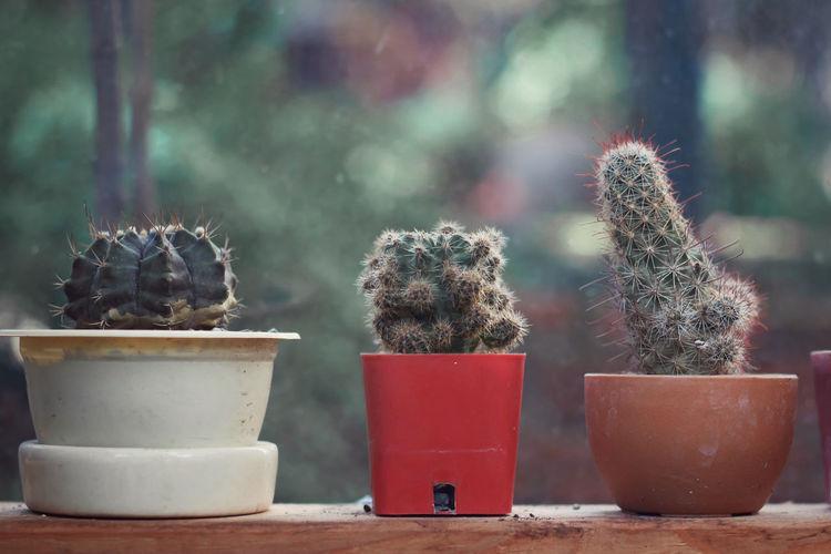 Close-up of cactus in pot