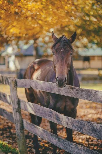 Portrait of horse standing in pen