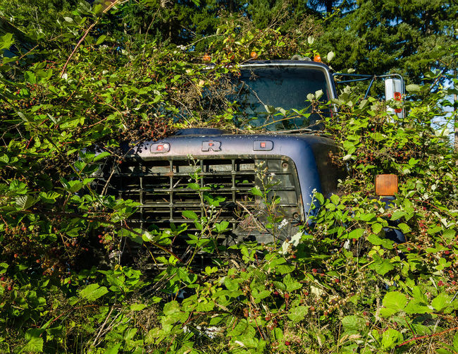 1x1 Abandoned Black Berry Vines Blue Buried Buried Cars Covered Greenery Truck