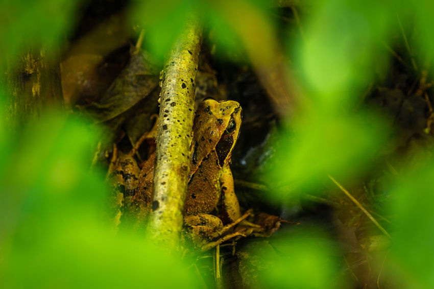 Toad sitting on ground among green leaves on a sunny spring day Discover Your City Frog Macro Photography Toad Animal Detail Domestic Animals Forest Green Leafes Leafes Macro Roamtheplanet Summer Top View Woods
