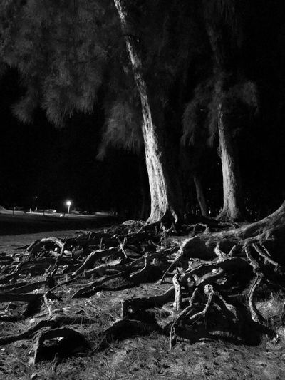 Night Tree Land