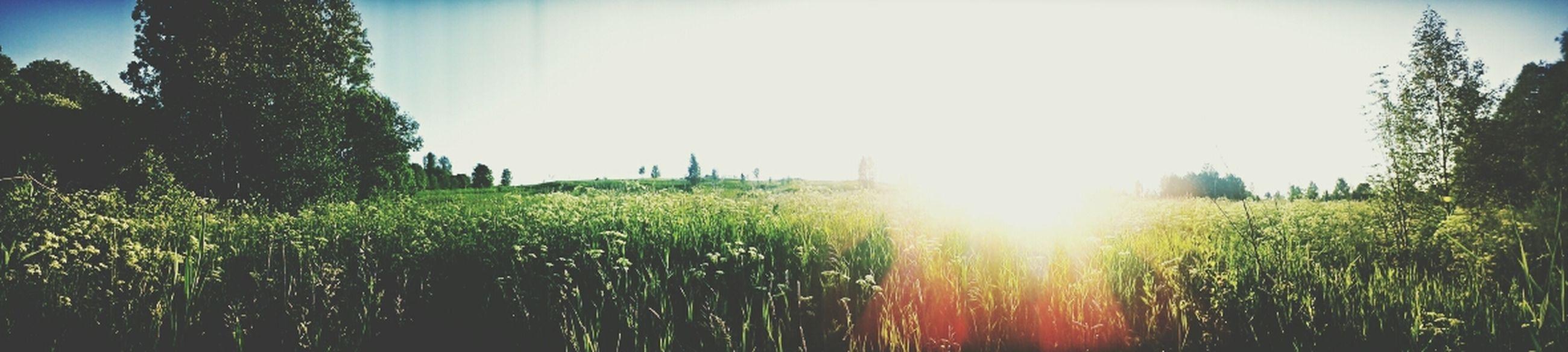 Summer Taking Photo Nature Sky