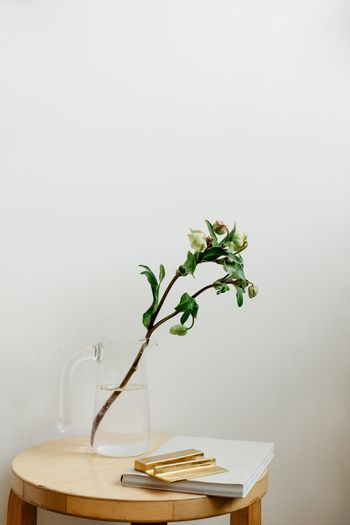 Potted plant on table against wall at home