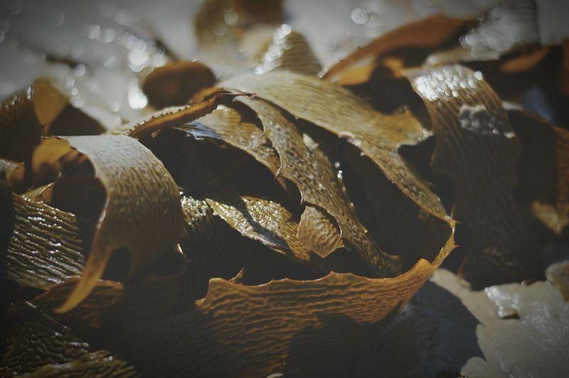 Close-up of seaweed at beach