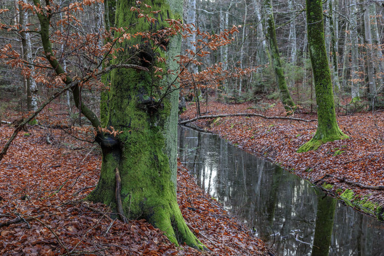 Autumn in the beech forest Autumn Creek No Sky Sweden Beech Beech Forest Fall Leaves No People Stream Sweden Nature Water Öland
