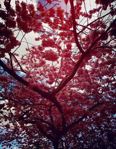 Tree Branch Low Angle View Nature Beauty In Nature Growth Day Outdoors No People Backgrounds Forest Full Frame Scenics Sky Freshness Flower Fragility Cherry Blossoms Stockholm Sweden Street Photography Cherry Tree Garden City Life Flowers