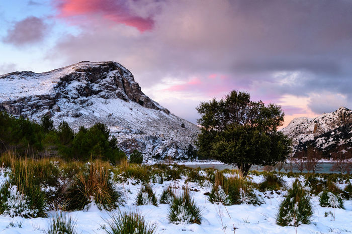 Winter in Mallorca Winter Scene Beauty In Nature Cloud - Sky Cold Temperature Day Dgcphotography Frozen Nature Golden Hour Lake Landscape Mallorca Winter Mountain Mountain Range Mountains Nature No People Outdoors Scenics Sky Snow Snowcapped Mountain Sunrise Sunset Tranquil Scene Tranquility Tree Water Winter