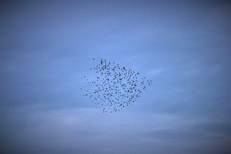 Flying birds...