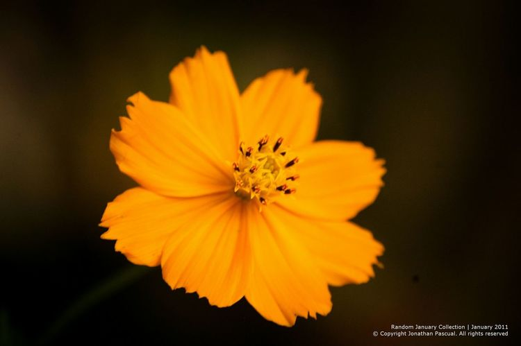 Yellow flower again. Eeyemphilippines Flowers Macrophotography Yellow Nature