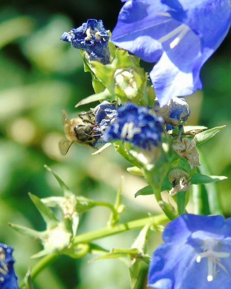 Enjoying Life Bee Plants Flower Outdoor Photography Nature Photography Green Blue