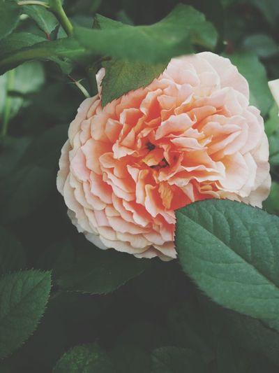 Flower Flowers Garden