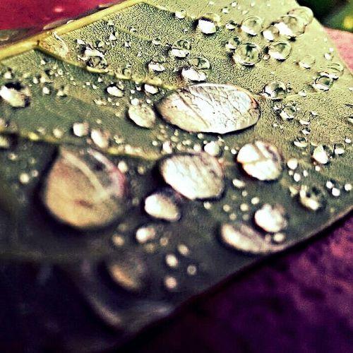 The rain last